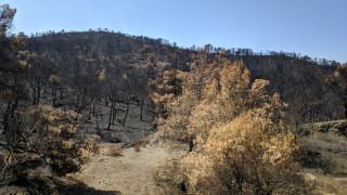 Συγκλονιστικό βίντεο από τις συνέπειες της φωτιάς στην Εύβοια: Η τεράστια καταστροφή από ψηλά