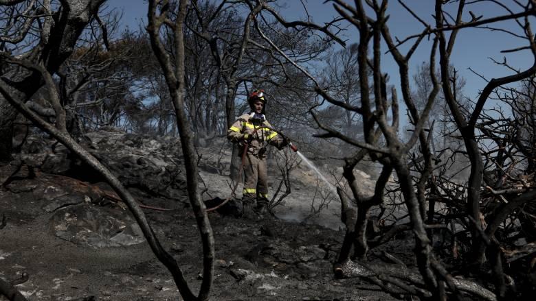 Φωτιά στην Τανάγρα