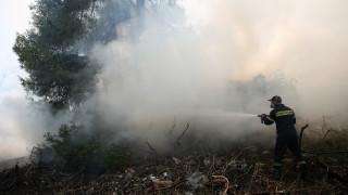 Πυρκαγιά σε δάσος στην Αρχαία Ολυμπία