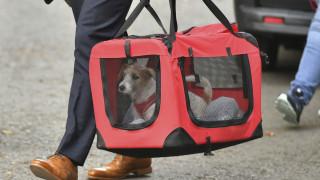 Ο νέος... τριχωτός κάτοικος της Ντάουνινγκ Στριτ: Ο Μπόρις Τζόνσον υιοθέτησε σκύλο