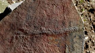 Το αρχαιότερο «ταξίδι» στη Γη: Ανακαλύφθηκε απολίθωμα ζώου σαν σαρανταποδαρούσα