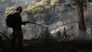 Φωτιά - Νέα Μάκρη: Πληθαίνουν οι καταγγελίες για εμπρησμό - Πώς ξέσπασε η φωτιά