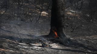 Φωτιές σε Μαρκόπουλο και Ασπρόπυργο
