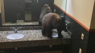 Απρόσμενος επισκέπτης: Αρκούδα αράζει στο μπάνιο ξενοδοχείου