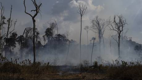 Η αποψίλωση της Αμαζονίας σχεδόν διπλασιάστηκε σε έναν χρόνο