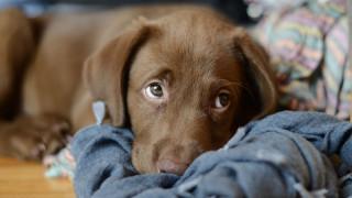 Νεκρά δεκάδες σκυλιά από μυστηριώδη νόσο στη Νορβηγία