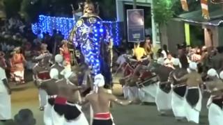 Σκηνές πανικού σε παρέλαση στη Σρι Λάνκα: Ελέφαντες ποδοπάτησαν όποιον βρέθηκε στο διάβα τους