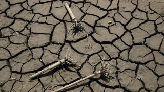 Η κλιματική κρίση πλήττει τις παγκόσμιες πωλήσεις κρέατος και εμφιαλωμένων ποτών