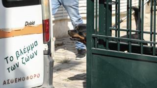 Νεκρό βρέφος από επίθεση σκύλου: Η φιλοζωική πήρε το ροτβάιλερ