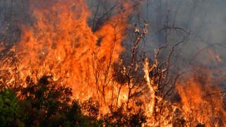 Meteo: Πολύ υψηλός έως ακραίος σήμερα ο κίνδυνος εξάπλωσης πυρκαγιάς