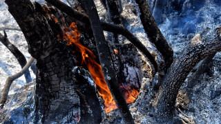 Φωτιά στα Μέγαρα