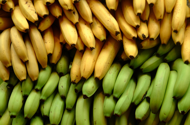 design dog bananas