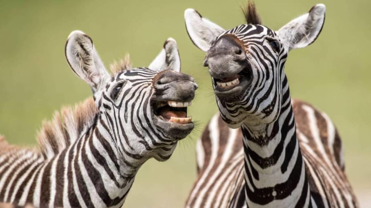 Οι κωμικοί της φύσης: Άγρια ζώα σε ξεκαρδιστικές πόζες - CNN.gr