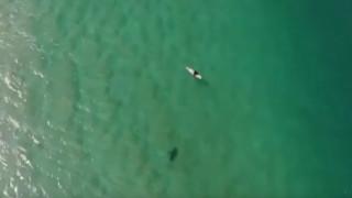 Από μηχανής Θεός: Πώς ένα drone έσωσε σέρφερ από επίθεση καρχαρία