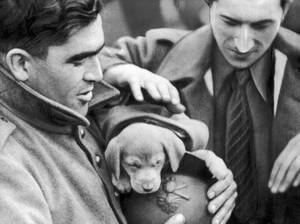 1939, Γαλλία. Οι στρατιώτες του γαλλικού στρατου υιοθέτησαν αυτό το κουτάβι, που βρέθηκε κοιμισμένο στις αμυντικές τους γραμμές στο δυτικό μέτωπο.