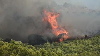 Φωτιά στην περιοχή Αγιονόρι Κορινθίας