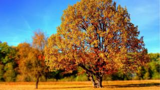 Φθινόπωρο: Το Doodle της Google για τη φθινοπωρινή ισημερία