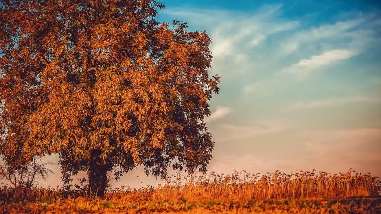 Φθινόπωρο: Ξεκινά και επίσημα σήμερα - Τι ώρα είναι η φθινοπωρινή ισημερία