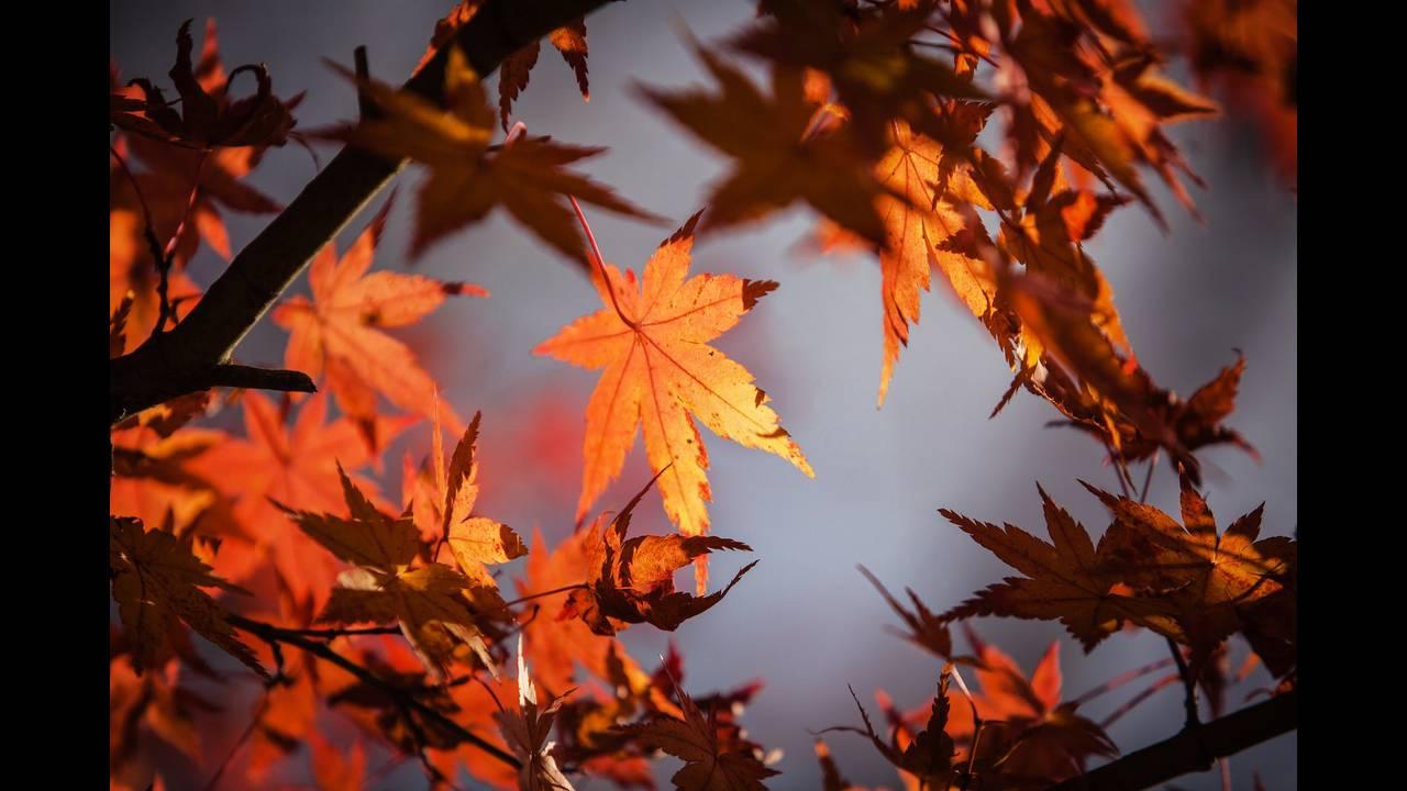 https://cdn.cnngreece.gr/media/news/2019/09/23/191496/photos/snapshot/autumn-leaves-1415541_1920.jpg