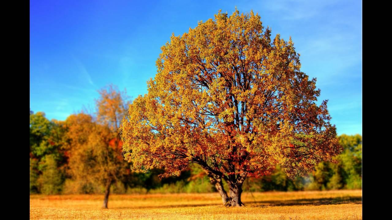https://cdn.cnngreece.gr/media/news/2019/09/23/191496/photos/snapshot/tree-99852_1920.jpg