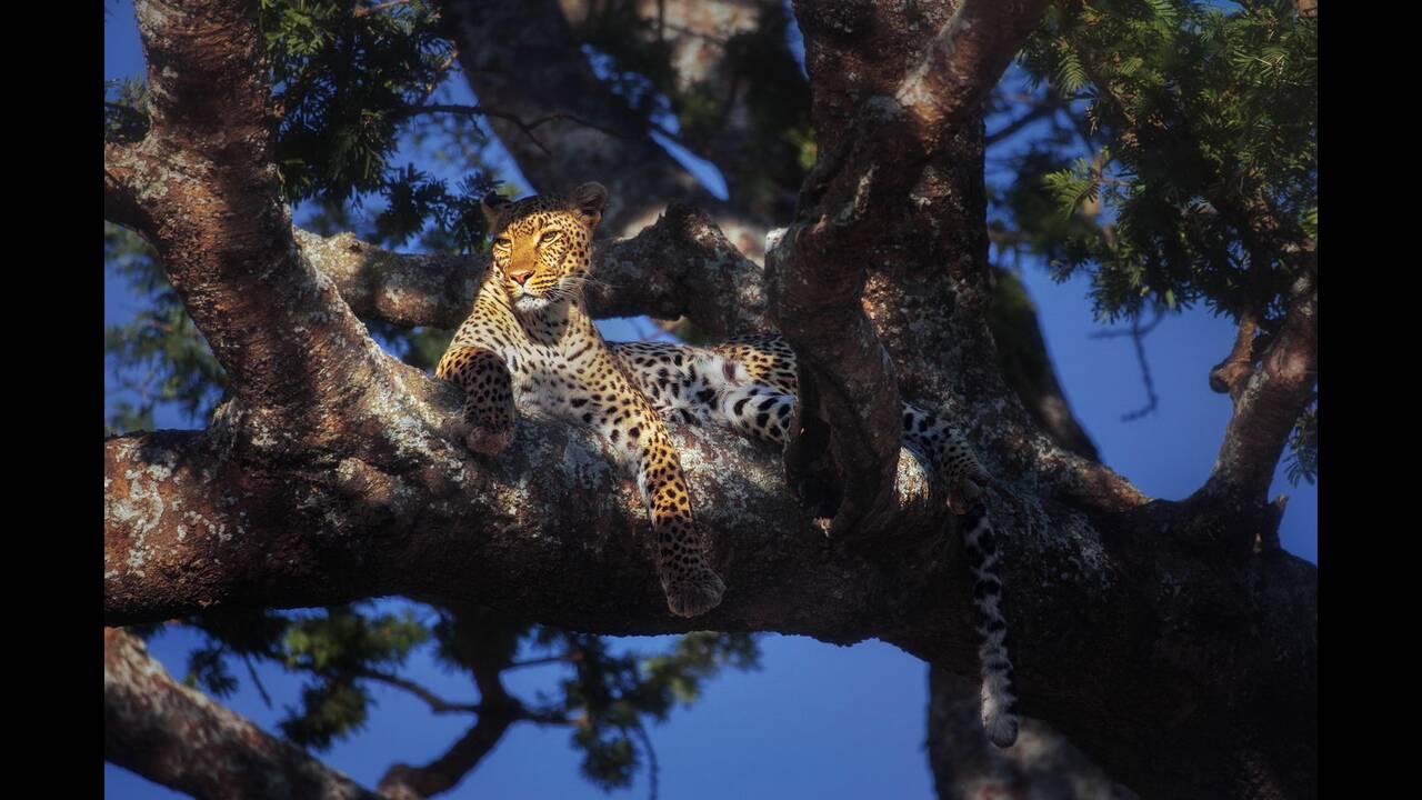 https://cdn.cnngreece.gr/media/news/2019/09/24/191654/photos/snapshot/Leopard-SerengetiNationalParkTanzaniaPanosLaskarakis.jpg