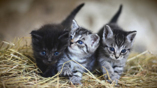 «Οι γάτες συνδέονται συναισθηματικά με τους ανθρώπους»: Νέα, αποκαλυπτική έρευνα