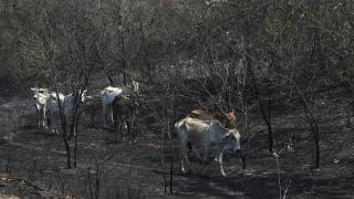 Αποκαρδιωτικά στοιχεία για τις πυρκαγιές στη Βολιβία: Πέθαναν τουλάχιστον 2,3 εκατομμύρια άγρια ζώα