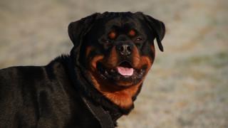 Πέλλα: Σκύλος επιτέθηκε και τραυμάτισε δίχρονη στο πρόσωπο