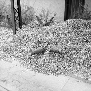 1959, Κοπενχάγη. Δύο αγόρια, παίζουν μέσα στα πεσμένα φθινοπωρινά φύλλα.