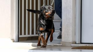 «Ευτυχώς γλιτώσαμε τα χειρότερα»: Τι λέει η μητέρα της δίχρονης που της επιτέθηκε σκύλος στην Πέλλα