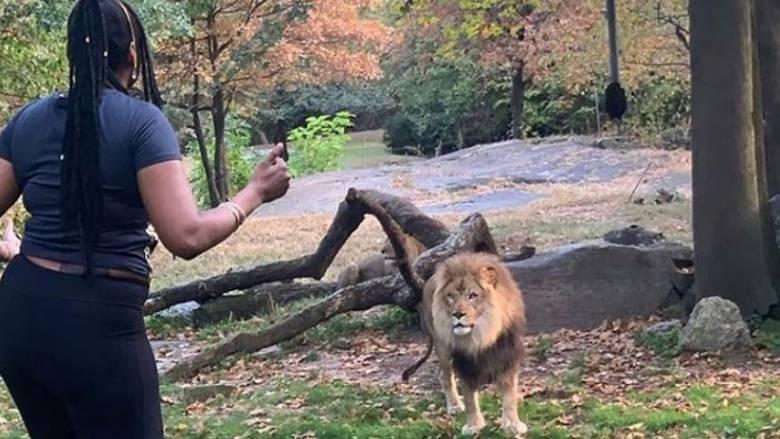 Απίστευτο και όμως αληθινό: Γυναίκα πήδηξε μέσα σε κλουβί λιονταριού σε ζωολογικό κήπο