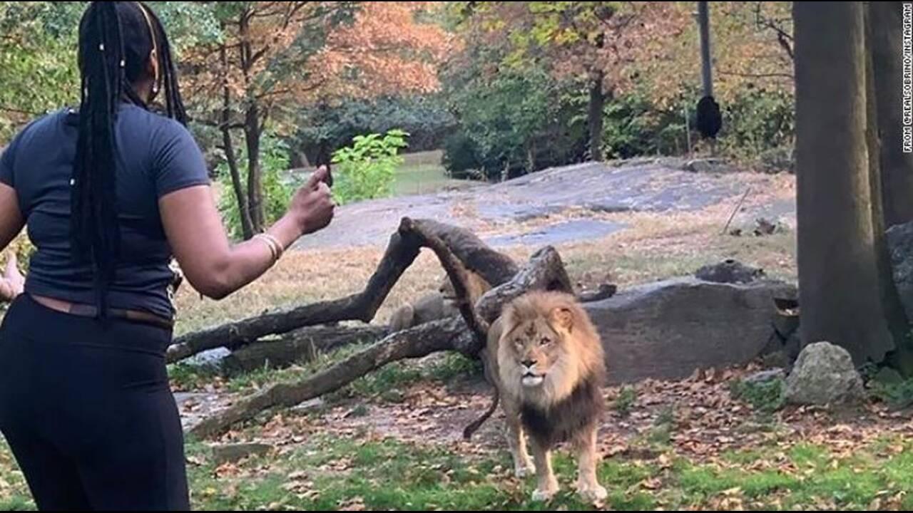 https://cdn.cnngreece.gr/media/news/2019/10/02/192536/photos/snapshot/lion.JPG