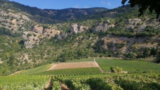 Ταξίδι από τα ελληνικά terroir και οινοποιεία στο… ράφι της Lidl