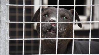 Φρίκη στη Σκωτία: Τάιζε ζωντανές γάτες τους σκύλους του