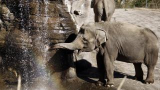 Θλίψη: Έξι ελέφαντες σκοτώθηκαν προσπαθώντας να σώσουν ο ένας τον άλλον