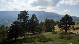 Μανιτάρι… 11 κιλών εντοπίστηκε στα Γρεβενά