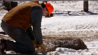 Σε συναγερμό 24 πολιτείες των ΗΠΑ για «ελάφια ζόμπι»