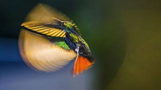 Ζώα σε κίνηση: Η μαγεία της φύσης σε 10 εντυπωσιακά «κλικ»