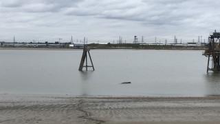 Φάλαινα 10 μέτρων βρέθηκε να επιπλέει νεκρή στον Τάμεση