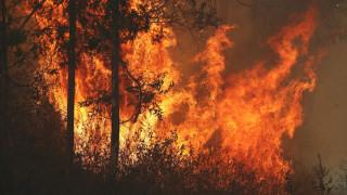 Αυστραλία: Ένα ηλικιωμένο ζευγάρι τα πρώτα θύματα των δασικών πυρκαγιών