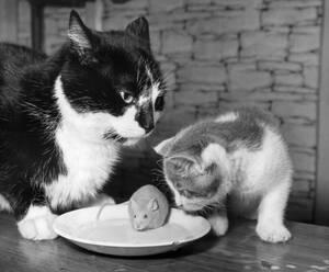 1969, Αγγλία. Ο Τάιγκερ και η Τίκι φαίνεται σαν να ετοιμάζονται για το γεύμα τους, αλλά στην πραγματικότητα είναι φίλοι με τον Μίκι το ποντίκι και μοιράζονται όλοι μαζί ένα πιάτο με γάλα.