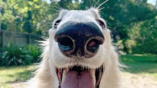Γνωρίστε την viral... Eris: Είναι αυτό το σκυλί με τη μεγαλύτερη μουσούδα στον κόσμο;