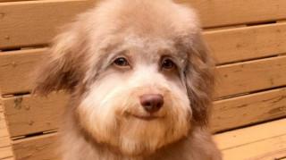 Ένας σκύλος με… ανθρώπινα χαρακτηριστικά