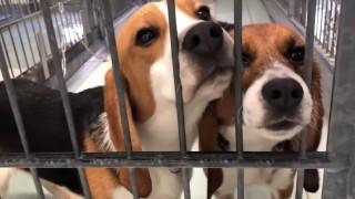 Οργή στη Γερμανία: Στο «φως» βίντεο - ντοκουμέντο με φρικτά βασανιστήρια πειραματόζωων