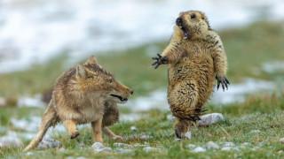 Εκπληκτικές εικόνες: Οι καλύτερες φωτογραφίες της χρονιάς για την άγρια φύση