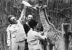 1975, Νότια Αφρική. Ο Ρίτσαρντ Μπάρτον ταΐζει μια νεαρή καμηλοπάρδαλη στο πάρκο Κρούγκερ, της Νοτίου Αφρικής. Δίπλα του, η Ελίζαμπεθ Τέιλορ.