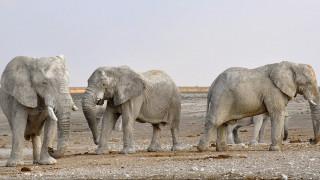 Θύματα της ξηρασίας οι ελέφαντες στη Ν. Αφρική: Πάνω από 150 νεκρά ζώα