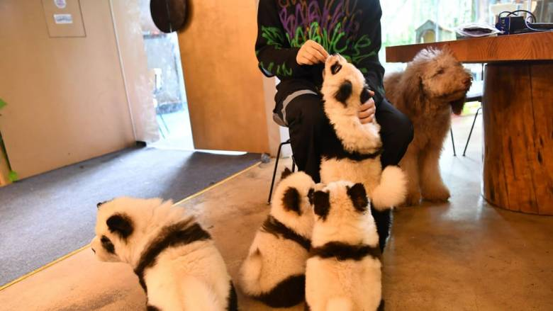 Οργή στα social media: Καφετέρια βάφει τους σκύλους... panda λόγω «ανταγωνισμού»
