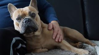 Καθυστέρηση πτήσης για τον πιο «σκυλίσιο» λόγο