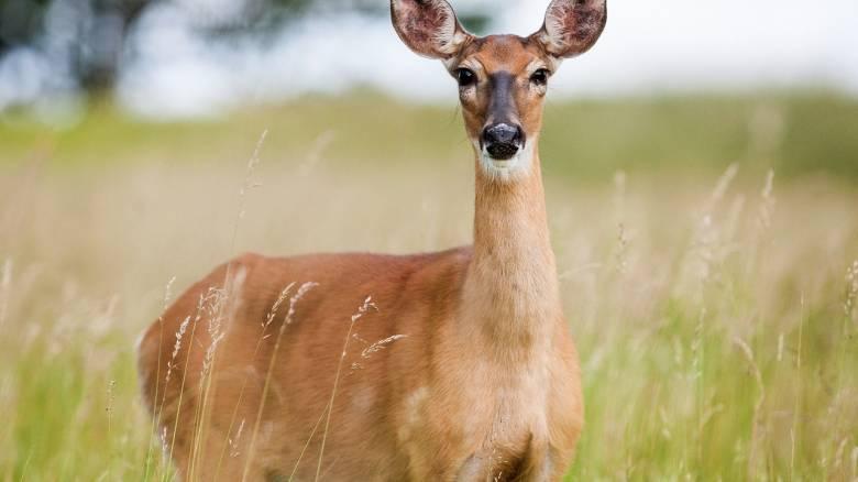 Κυνηγός νόμιζε ότι σκότωσε ελάφι, αλλά τελικά τον σκότωσε εκείνο